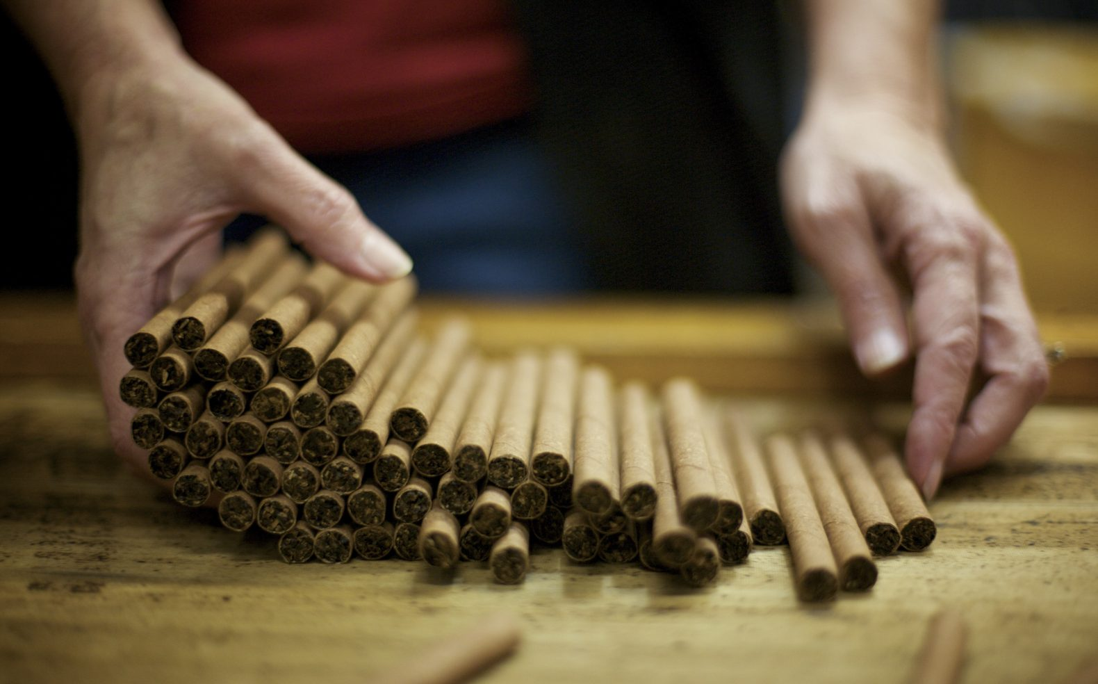 A worker's hands laying down a bunch of hand rolled, high end cigars on a table in a manufacturing facility.