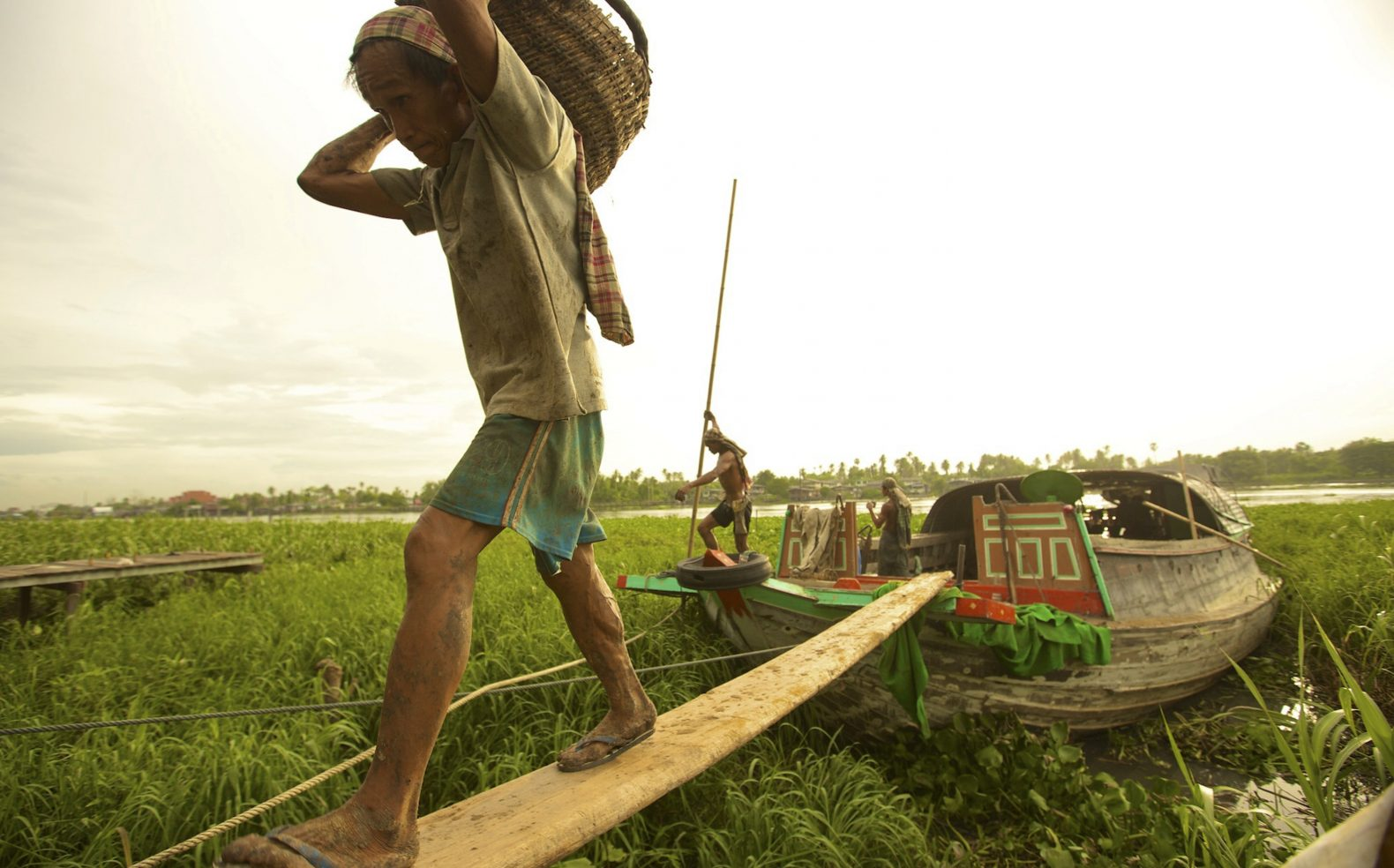 Native farmer in an asian country unloading goods by walking on a wooden board from a boat that sits in high marsh grass.