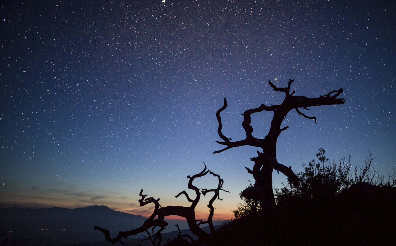 Stars in a navy blue sky above a sunset that are seen through barren tree limbs in a dessert.