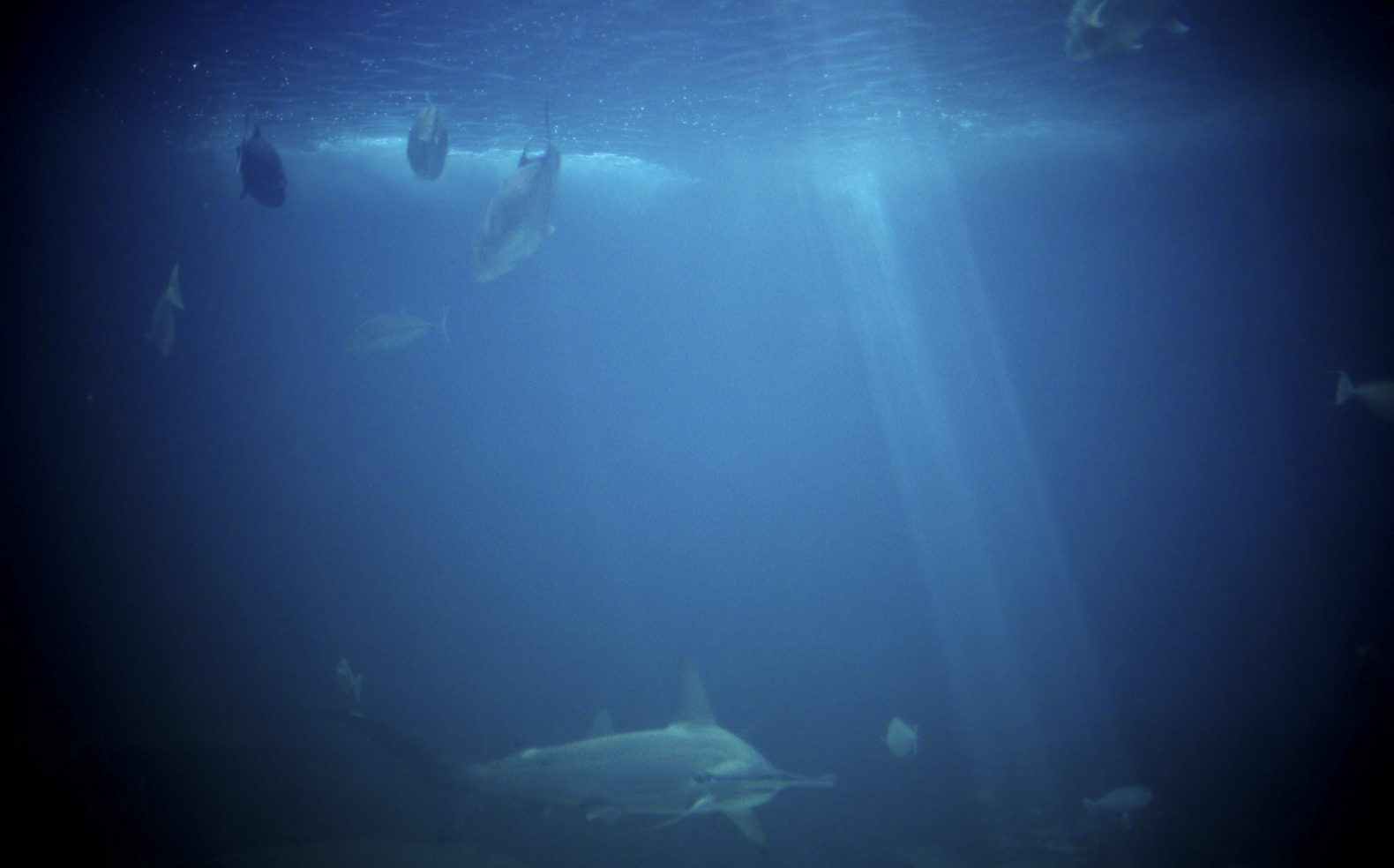 Professional travel photograph of sharks and fish swiming in a tank with some light filtering through the water.